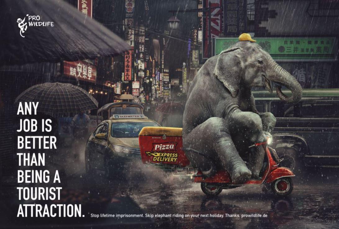 01 Pro Wildlife - Elephant