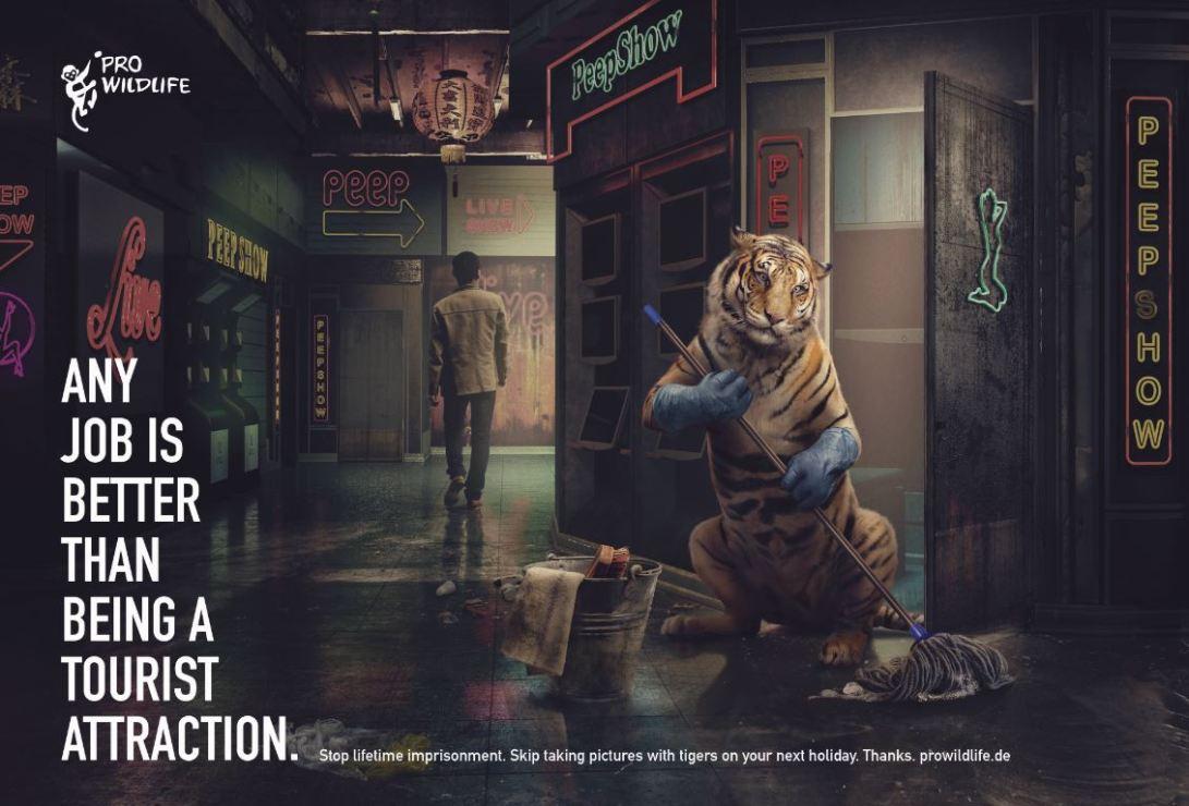 02 Pro Wildlife - Tiger