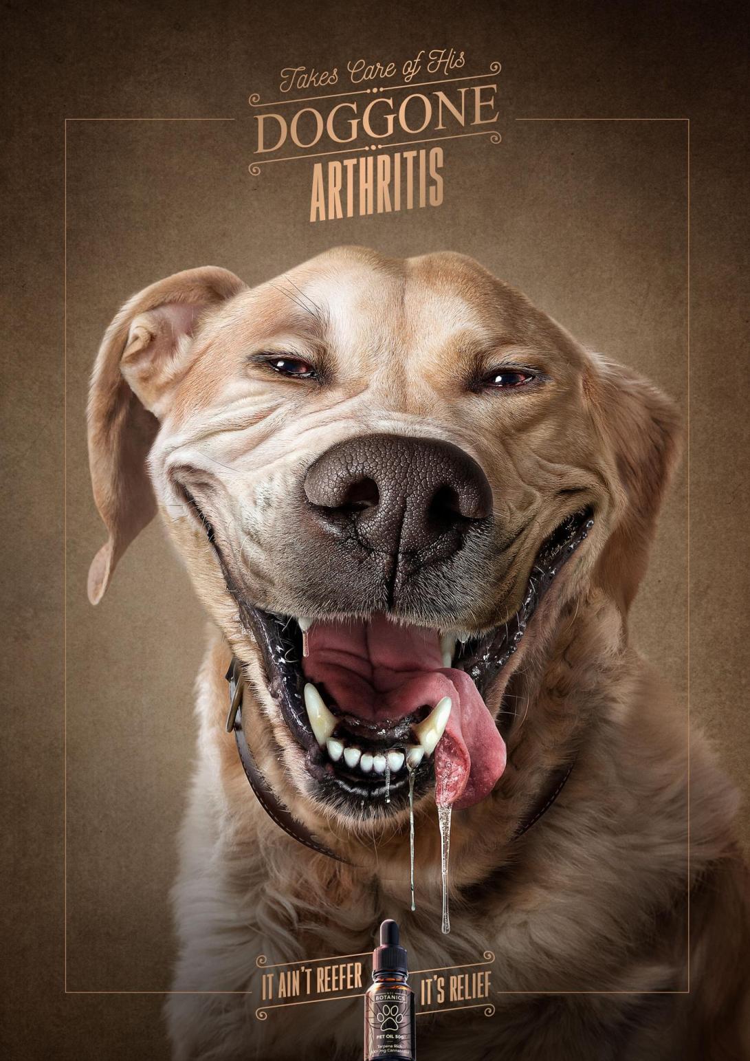 01 DOG